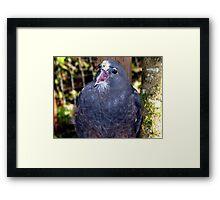 Dark morph, Swainson's Hawk Framed Print