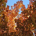 Fall 06 2 by juicebubble