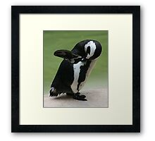 Penguin - London Zoo Framed Print