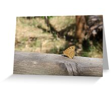 The Common Brown Butterfly Greeting Card