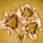 Daylily Trio by Colleen Farrell