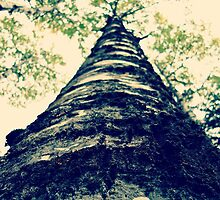 Looking Up the Big Tree by saucyapple