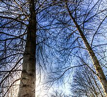 Majestic Trees by DavidHornchurch