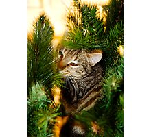 Minerva at Xmas Photographic Print