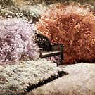 Bench In A Magical Garden - Infrared Series by Jane Neill-Hancock