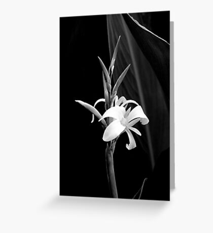 Canna Lily in Black & White Greeting Card
