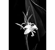 Canna Lily in Black & White Photographic Print