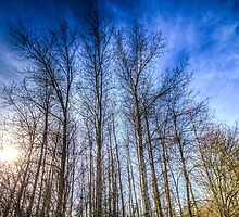 Sunset Trees by DavidHornchurch