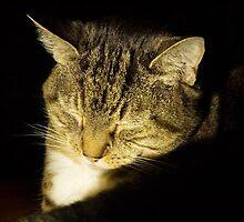 Scoop Sleeping by secondcherry