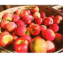 Bayfield Apples  Photographic Print