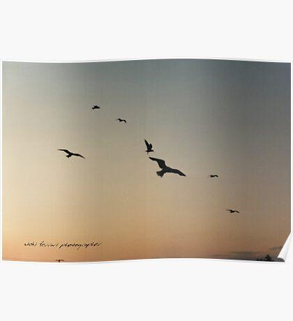 Soaring Sunset Seagulls © Vicki Ferrari Photography Poster