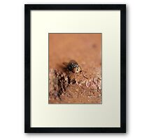 The Fly Framed Print