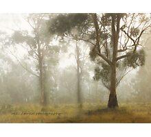 Wilberforce Morning Mist © Vicki Ferrari Photographic Print