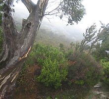 Tree in fog on the banks of Dove Lake,  Cradle Mountain, Tasmania by Marilyn Baldey