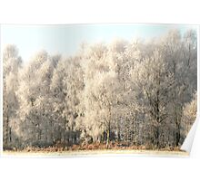 frosty birches Poster