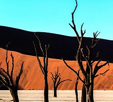 Deadvlei trees by Marylou Badeaux