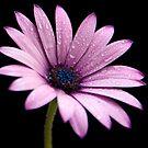 Pink by Jeremy Owen