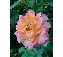 Light yet Bold Rose Photographic Print