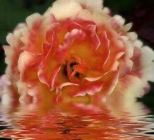 A Rose Is A Rose by Deborah  Benoit