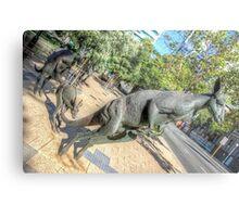 Kangaroos In The City 3 - Perth WA - HDR Metal Print