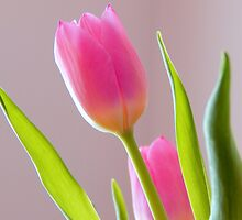 Budding beauty by Karen Cook