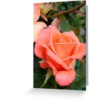 Coral Rose Greeting Card