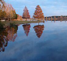 Cypress on Point - Autumn by May Lattanzio