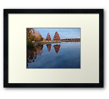 Cypress on Point - Autumn Framed Print