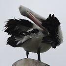 Pelican work by Kelly Robinson