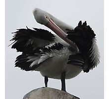 Pelican work Photographic Print