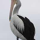 Pelican Look by Kelly Robinson