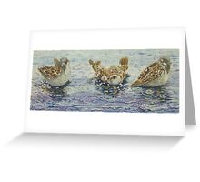 Sparrows Bathing Greeting Card