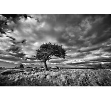 Windswept Photographic Print