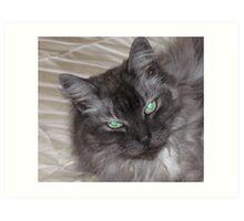 BEAUTIFUL GREY LONGHAIRED CAT Art Print