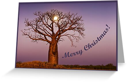 Moonlight Christmas by Mieke Boynton
