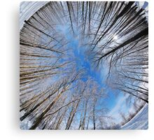 Winter park, round panorama Canvas Print
