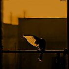 Feeling Freedom by aashiq