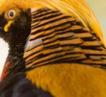 31115 Chinese Golden Pheasant Sticker