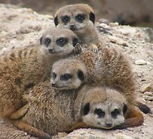Meerkat family portrait by MartynJames