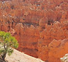 Bryce Canyon 2 by Mark  Allen