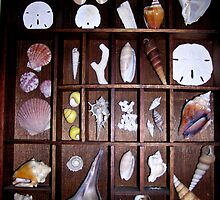 Shells by Sandy Sparks