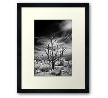 Dead Tree Infrared Framed Print