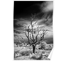 Dead Tree Infrared Poster