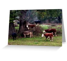 Cows sheltering under a trees in Tasmania. Australia Greeting Card