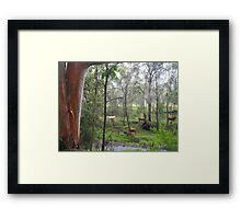 Cows in the background across the rocky stream Framed Print