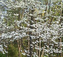 Flowering Dogwood by EeeksMae