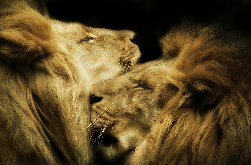 Brothers by Natalie Manuel