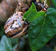 Caterpillar by Guy C. André Tschiderer