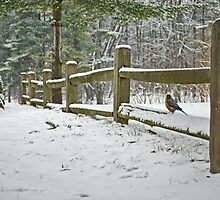 Michigan Bird by Maria Dryfhout