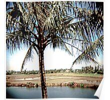 Hoi An palms Vietnam Poster